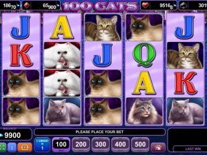 100-cats